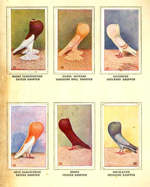 beeld duif en hand