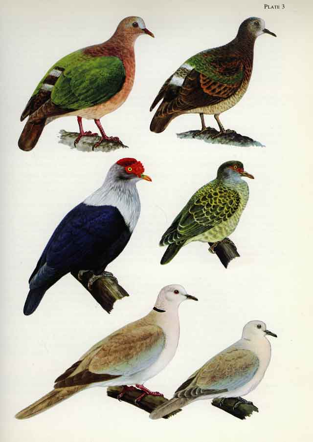 Dove And Pigeon Books